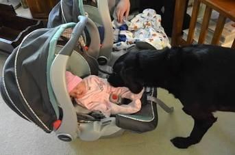 Newborn_twins-and-dog2