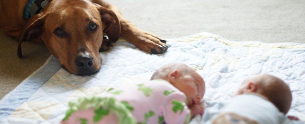 Newborn_twins-and-dog5