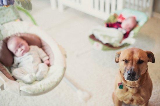 Newborn_twins-and-dog6
